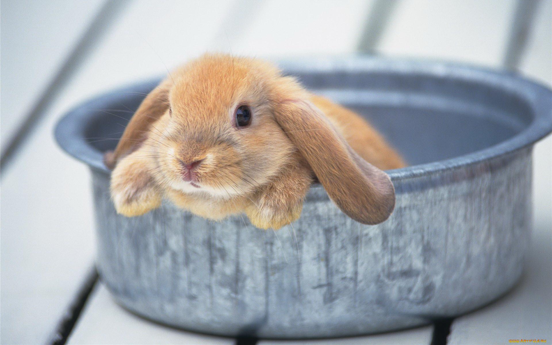содержание милые картинки зайцев нет абсолютно